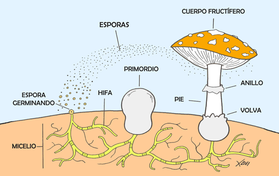 Esporas